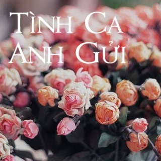 Tình Ca Anh Gửi - Various  Artists
