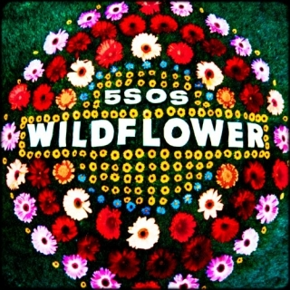 Wildflower (Single) - 5 Seconds Of Summer