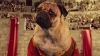 Irresistible (Starring Doug The Pug) - Demi Lovato, Fall Out Boy